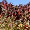 Autumn MalalaSR