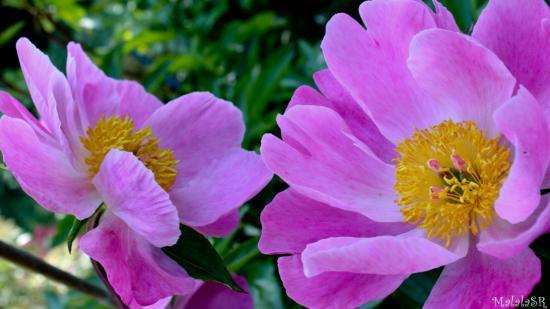 garden-mai-25-1.jpeg