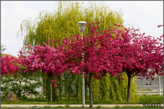 spring-03-1.jpeg