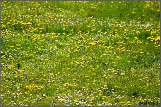 spring-06-1.jpeg