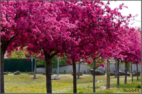 spring-07-1.jpeg