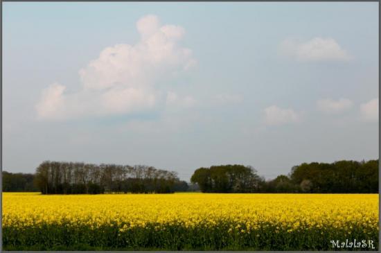 spring-08-1.jpeg