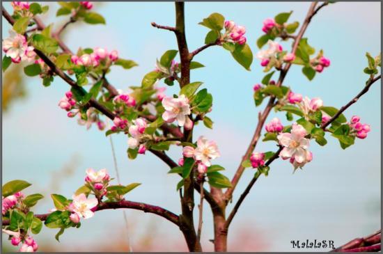 spring-14-1.jpeg
