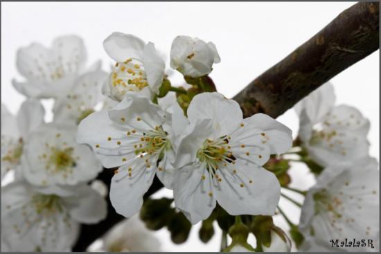 spring-15-1.jpeg