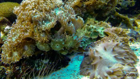 Tresors de la mer malalasr 2