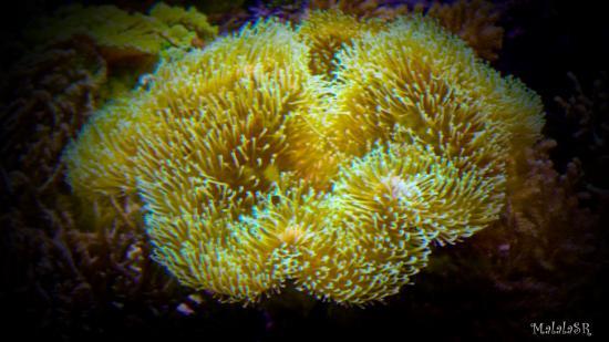 Tresors de la mer malalasr 6